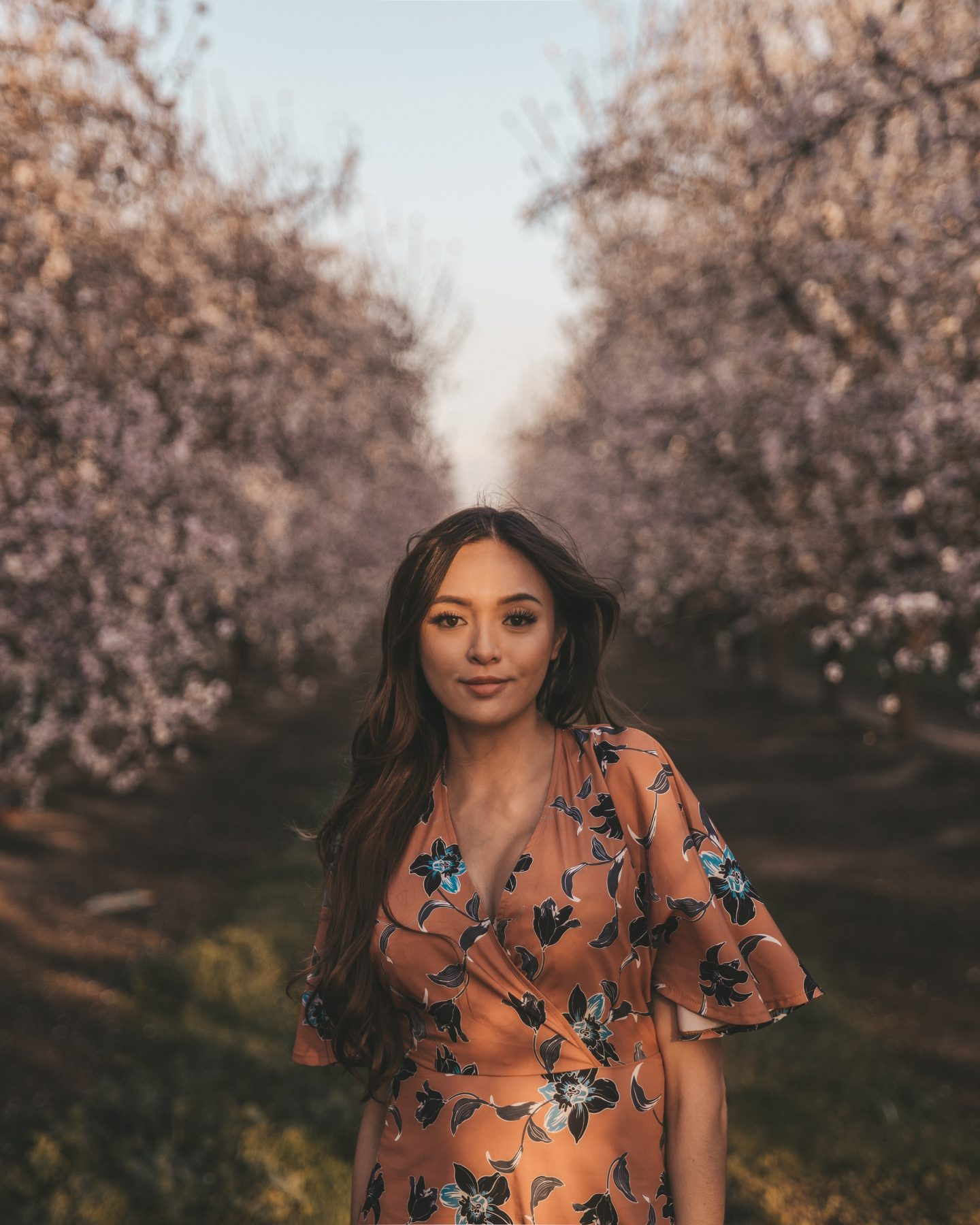 California Almond Orchards