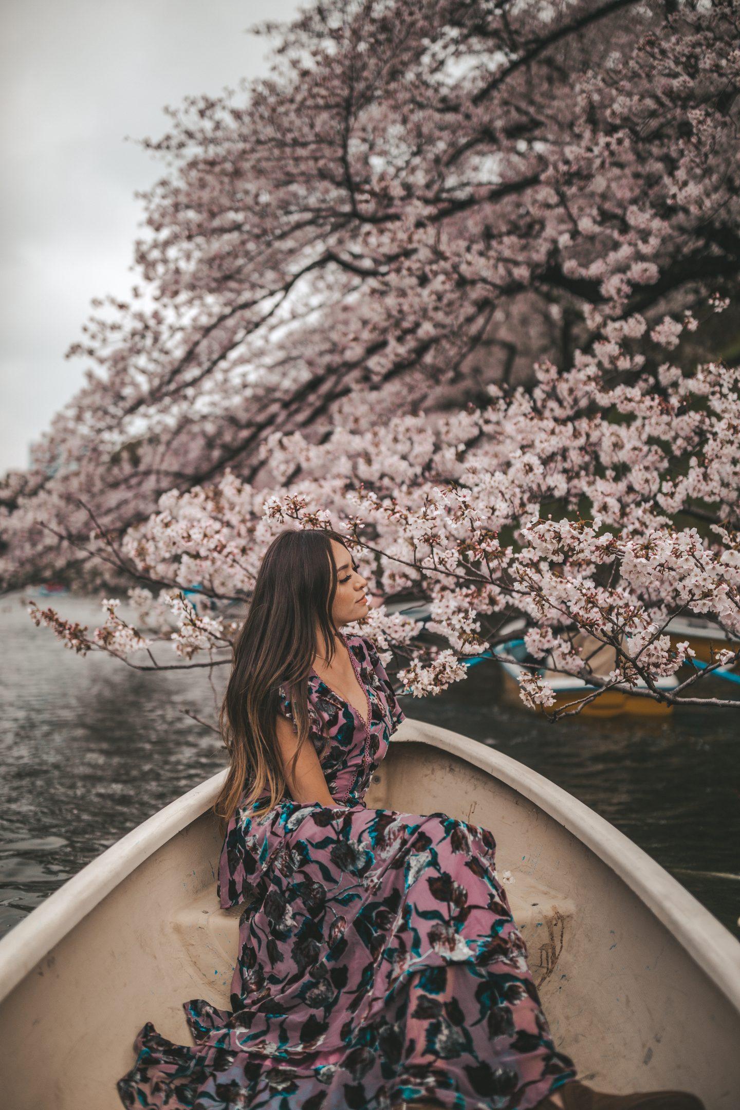 Chidorigafuchi Park boat cherry blossoms
