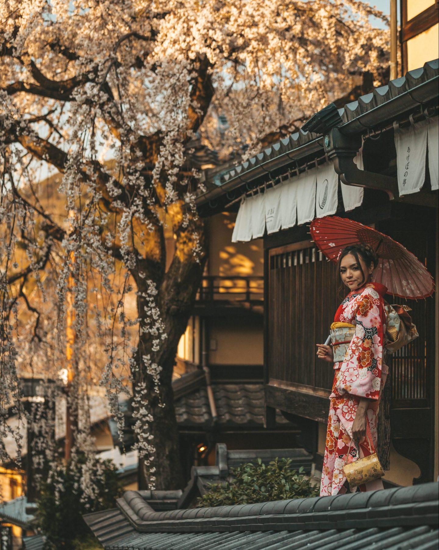 kimono furisode cherry blossoms