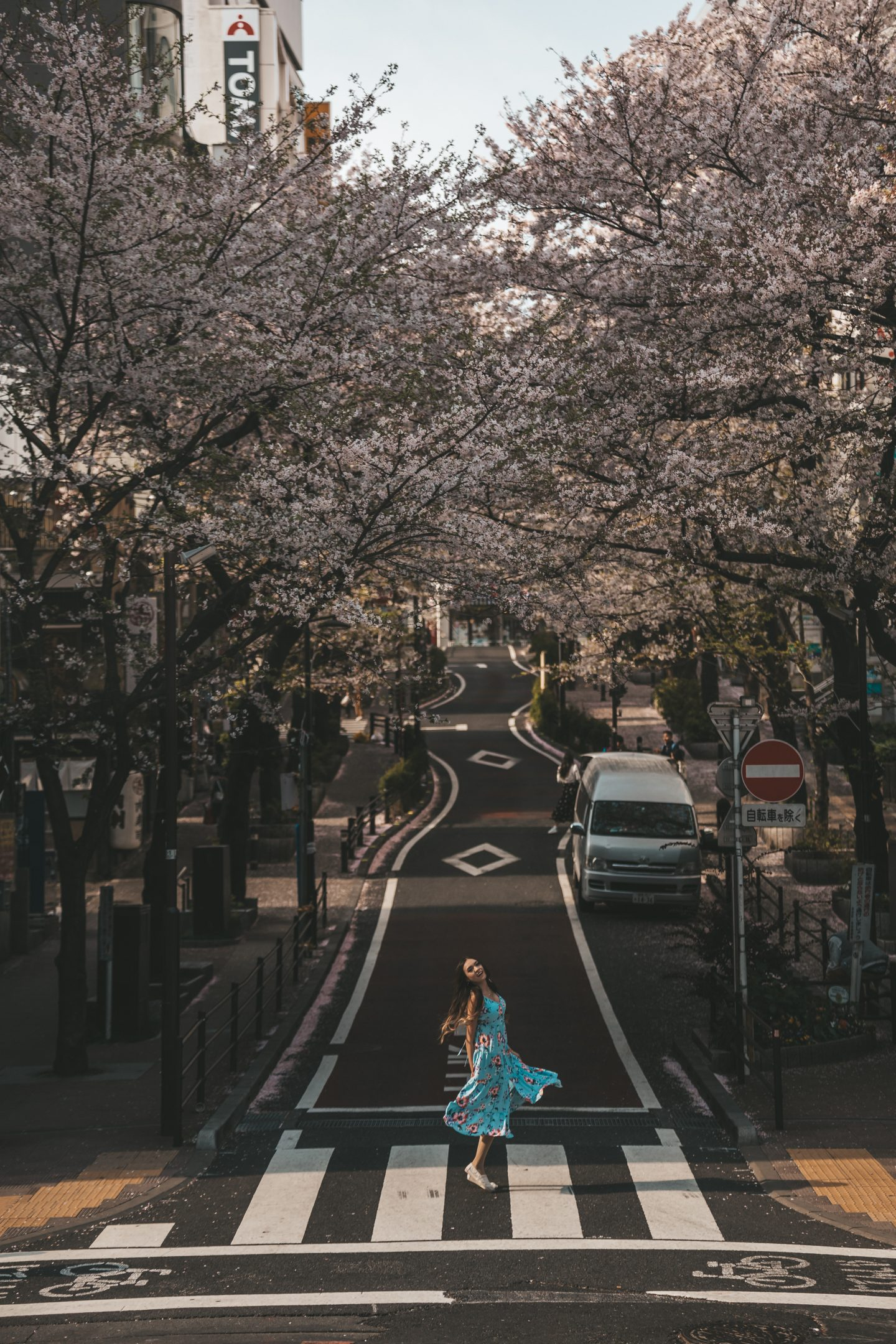 Shibuya station cherry blossoms