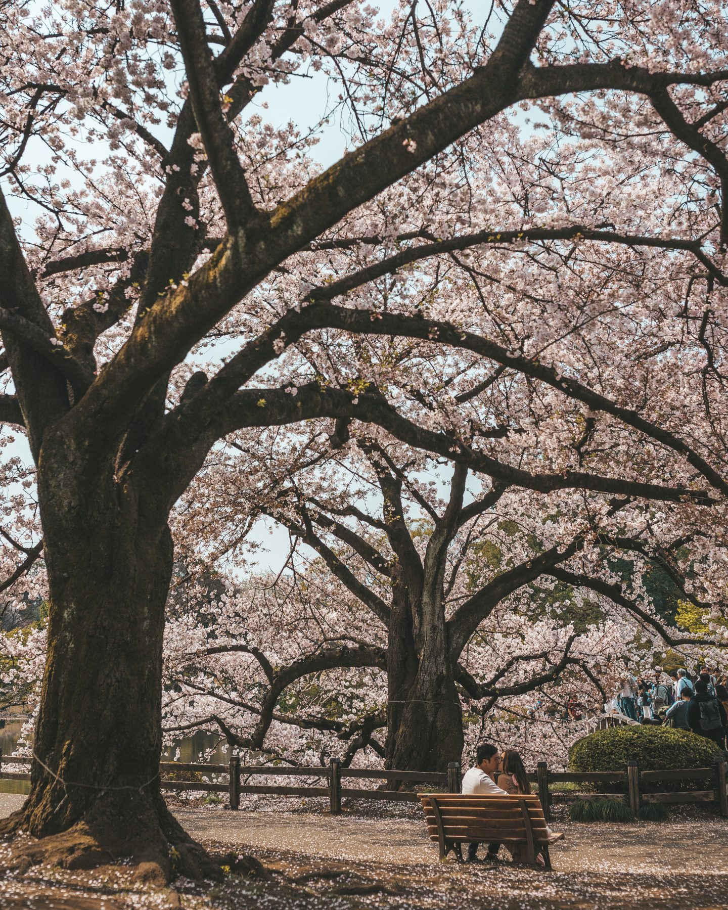 shinjuku gyoen garden couple kissing